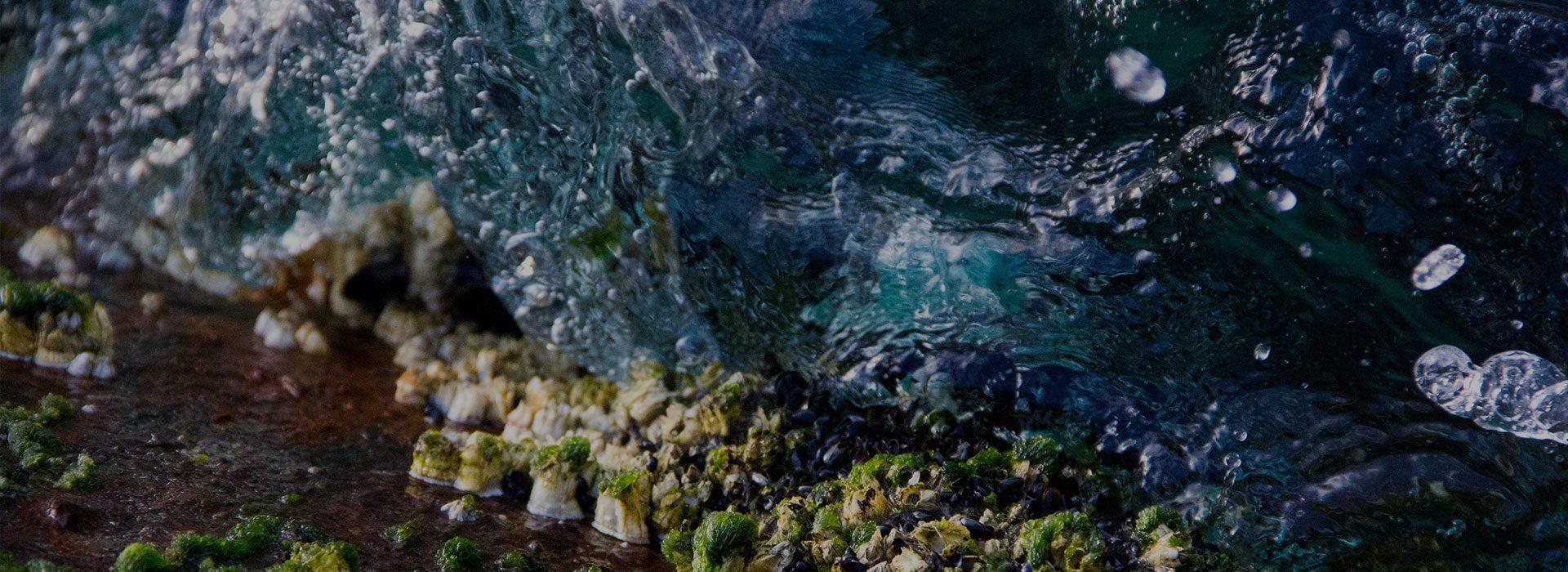 Ocean Citizen Science