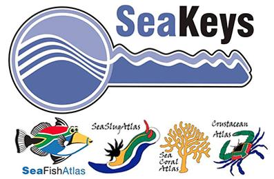 Seakeys_Cropped