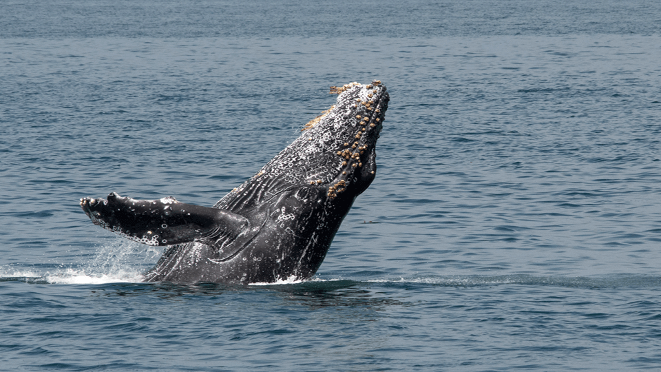 Whale Citizen Science