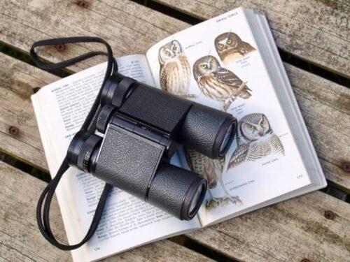 Birds and Birding